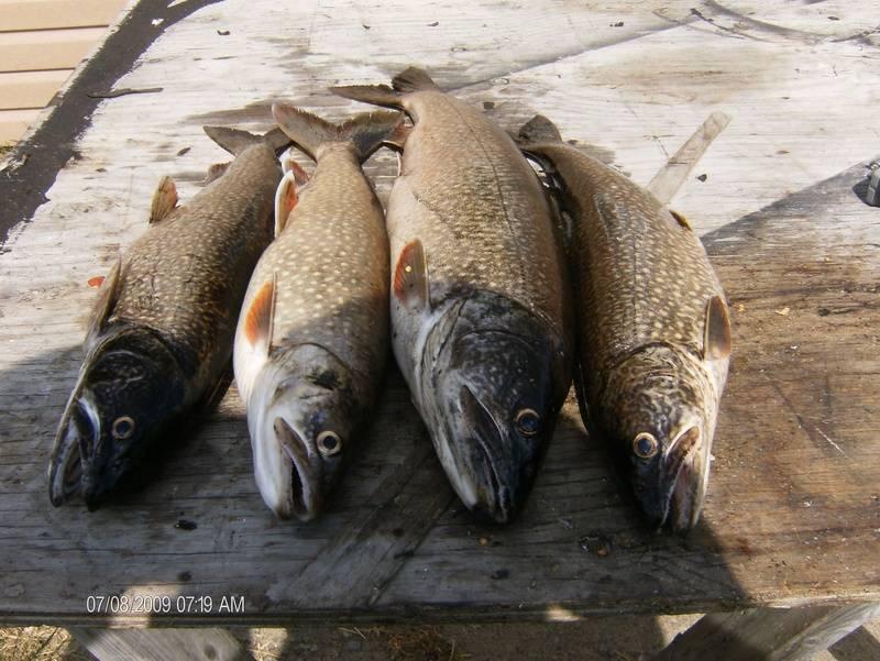 the 4 fish