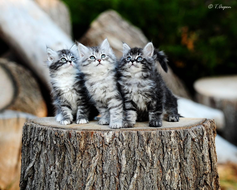 Three musketiers