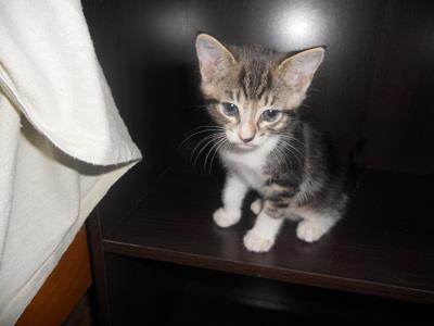 Available for pre-adoption