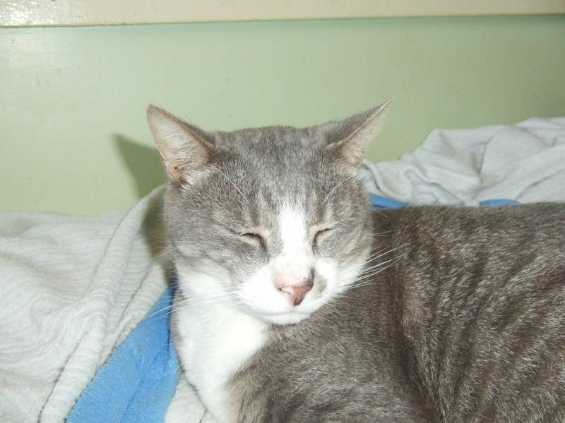 Smudge - adopted