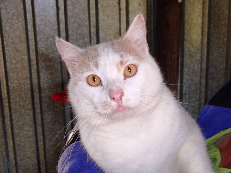 Tom - Available for adoption