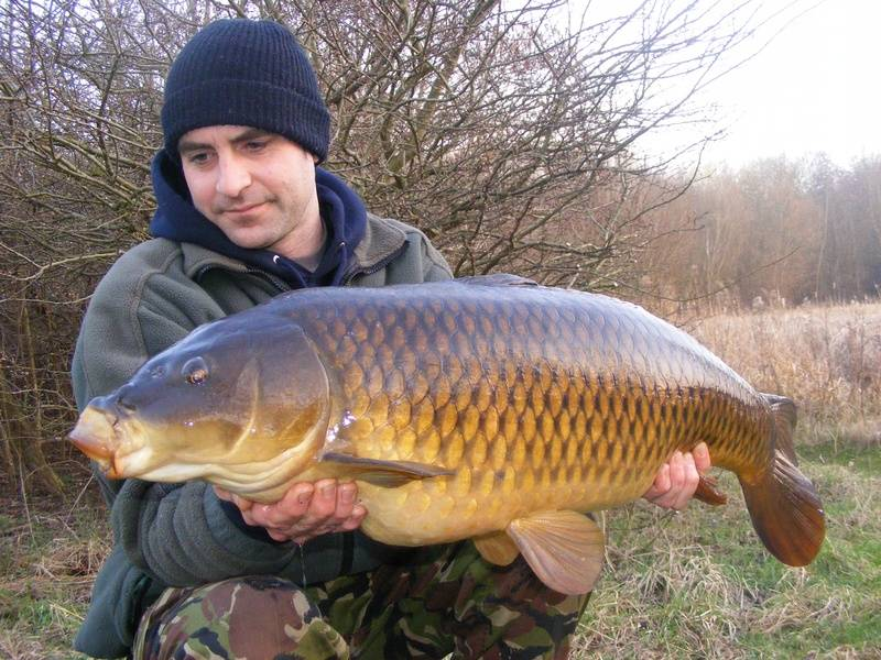 23lb+ elsons common