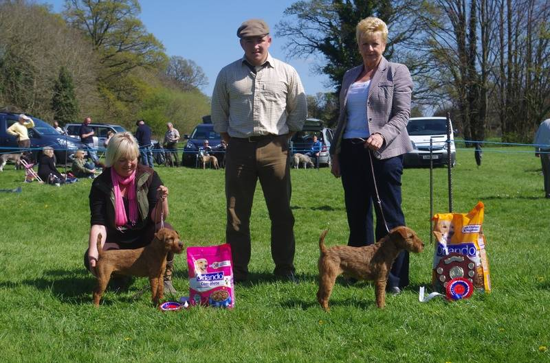 Champion & ReserveColoured Terrier