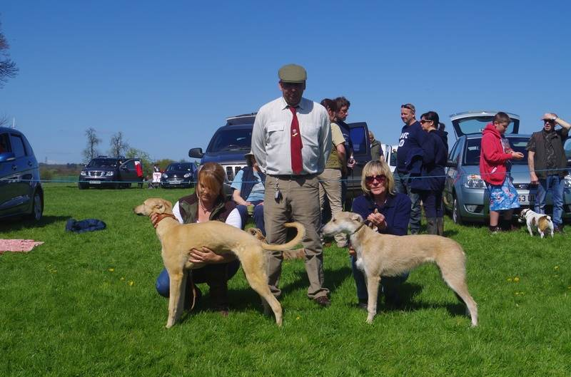 Champion & Reserve Lurcher Puppy