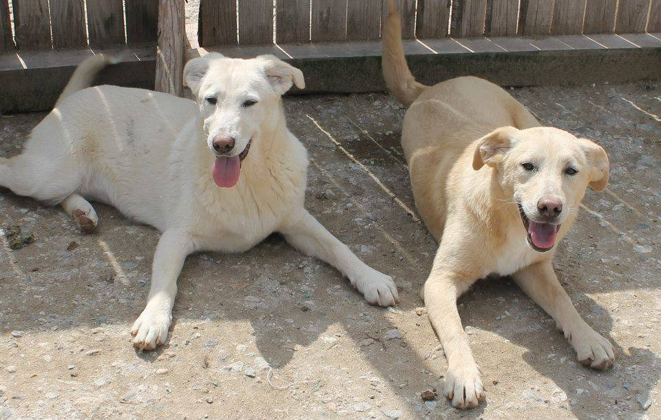 Spirit with her sister Tink