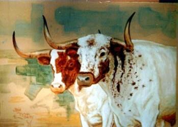Texas Longhorn's on the Miller Ranch