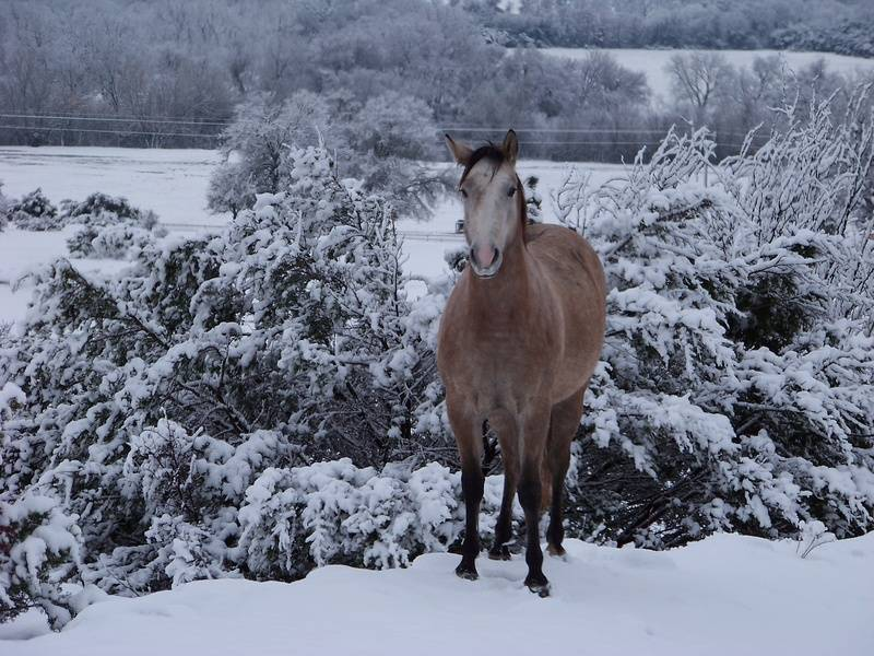 Winter on our ranch 2010