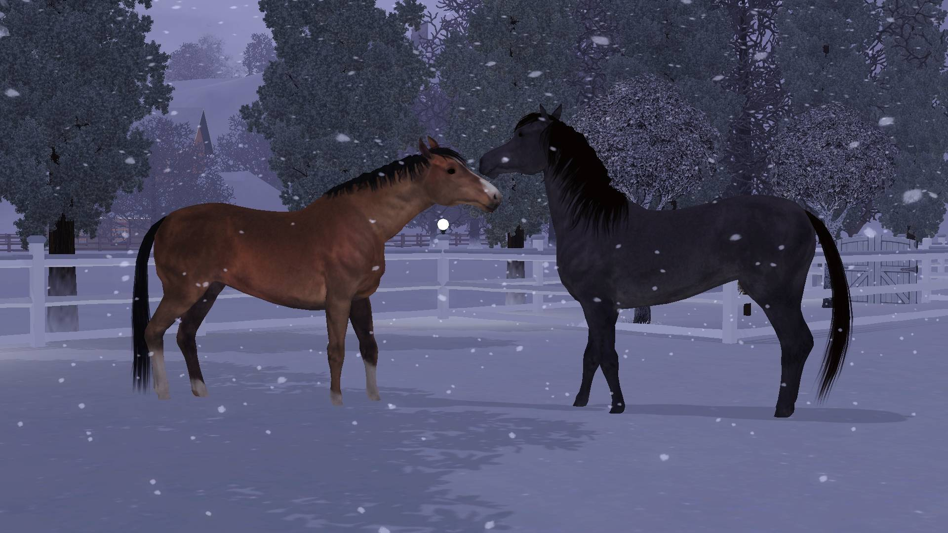 Horse play in the snow