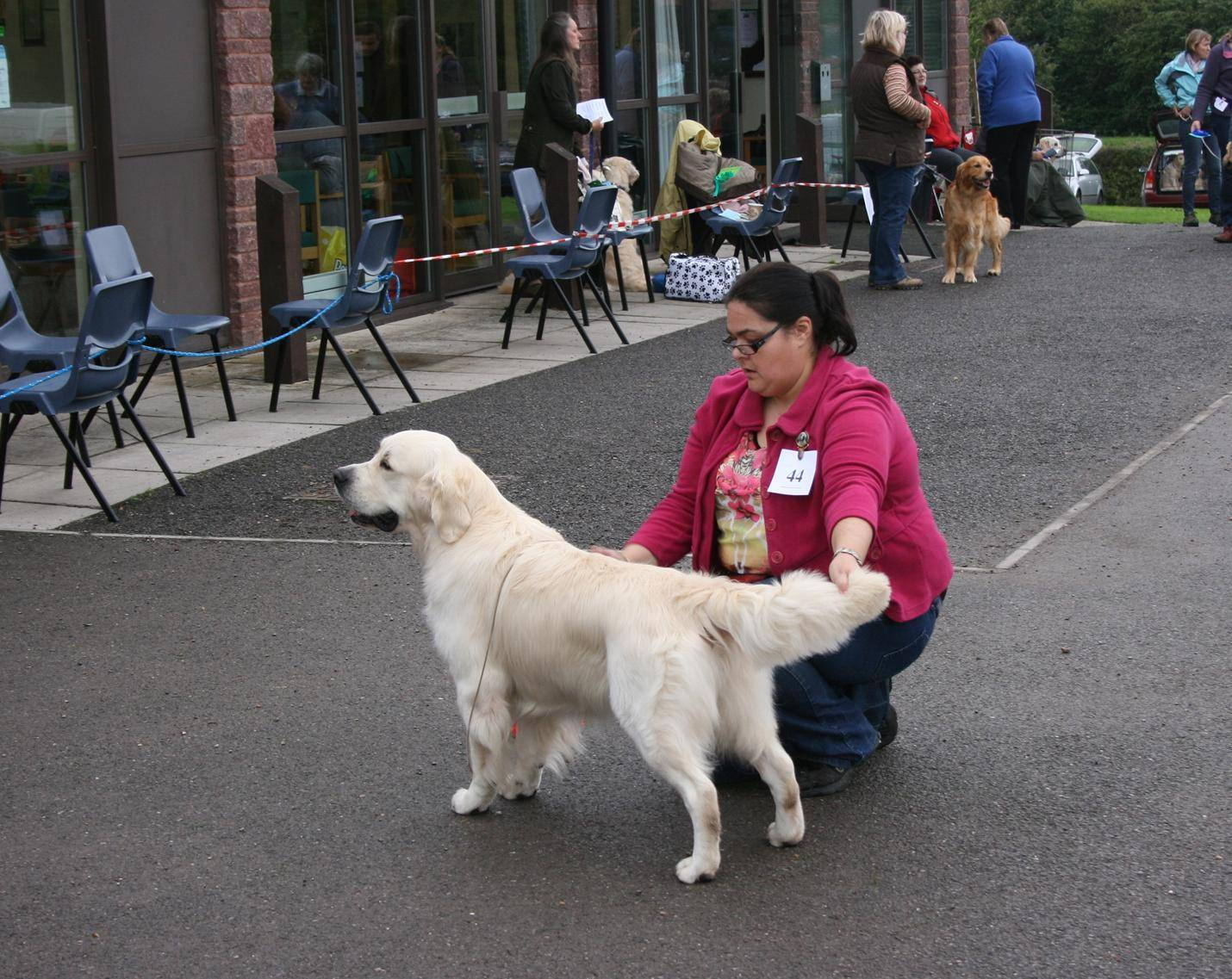 Drumkilty Take the High Road Winner of PG Dog