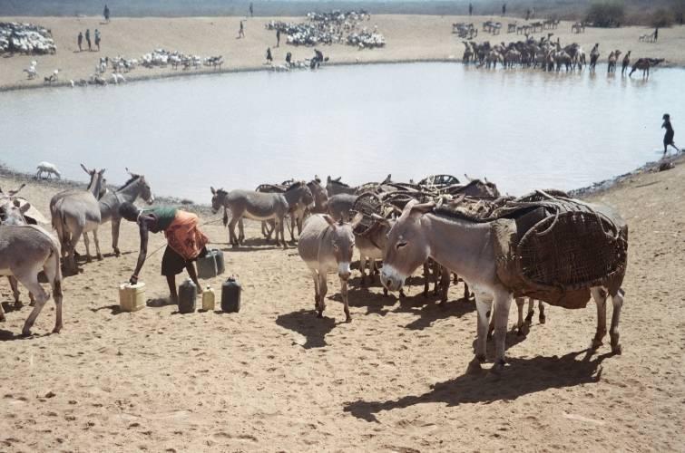 Daily life in Pokot