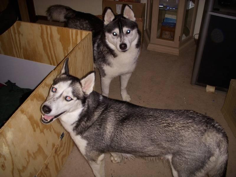 Kodiak and Nakita