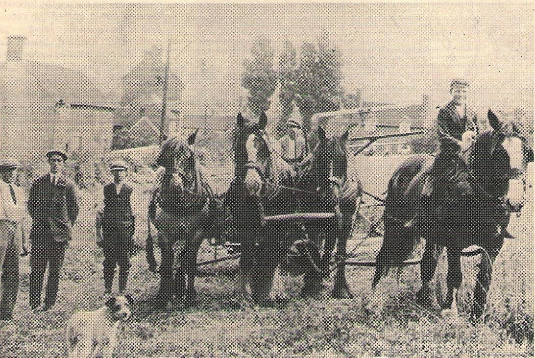 More Harvesting. 1920s.