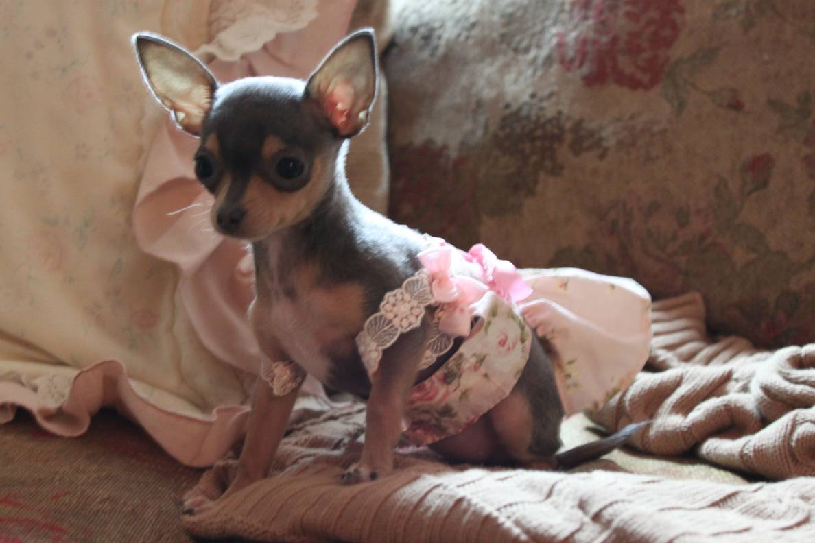 Chloe - lady in pink
