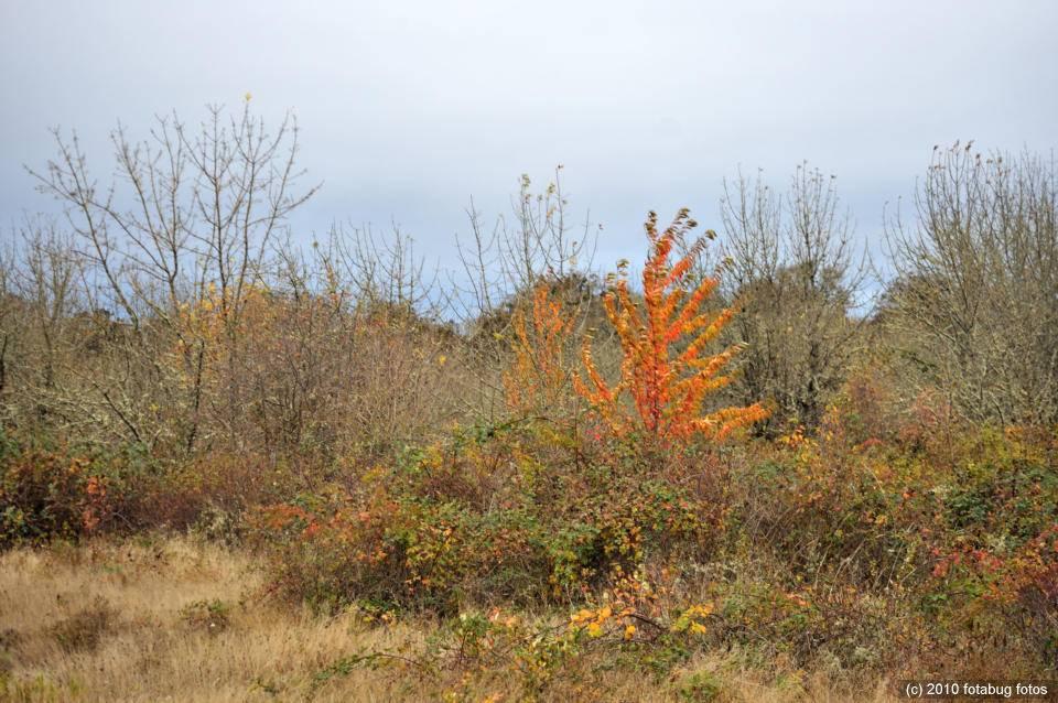 Fern Ridge Wildlife Area