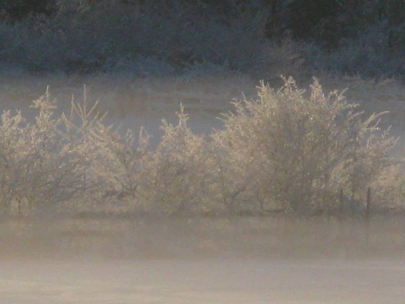 Pretty frosty trees.