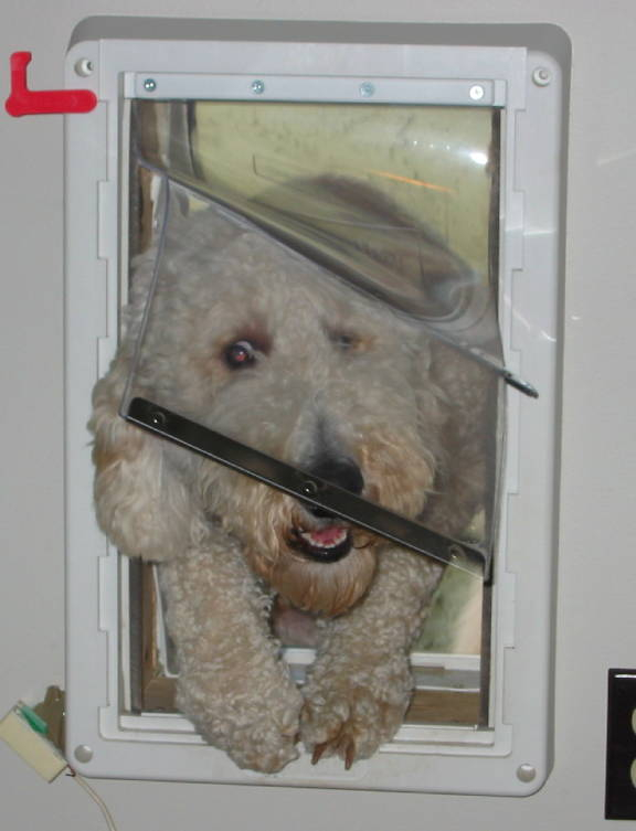 Trying out the new doggie door.