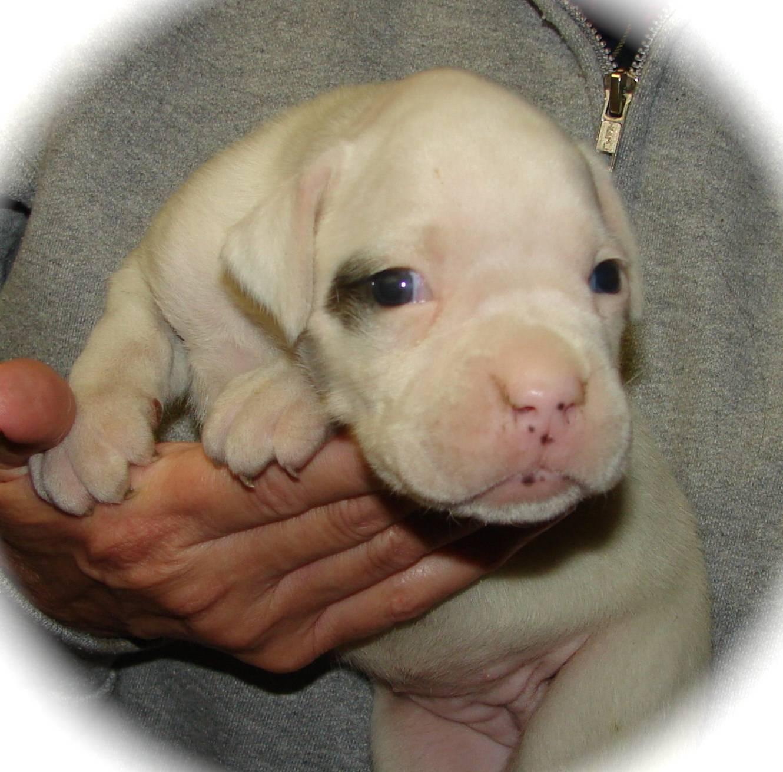 Otis and Gracie's Pup- Bella