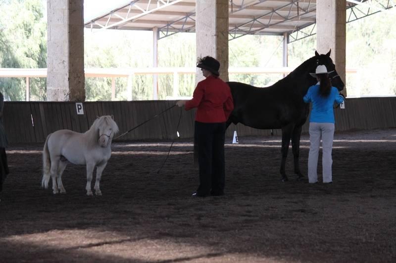 Equus Park Special Vintage