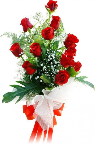 one dozen of roses