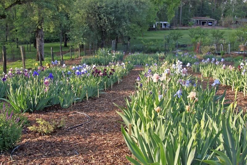 Meadow Vista Flower and Berry Farm, 715 Cole Road, Meadow Vista, California, 95722, USA