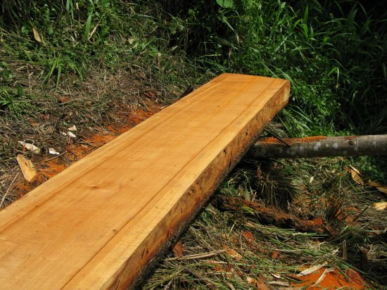 Illegal Logging Continues to Be a Problem