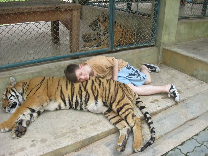 Love these new Tiger cushions