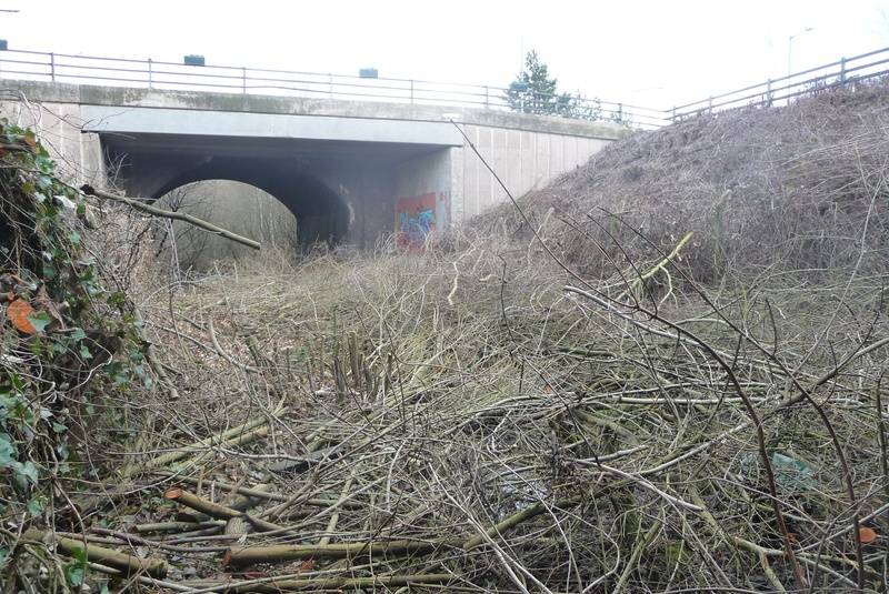 Felling of trees in the middle of the roundabout