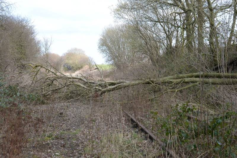 Fallen tree across the line