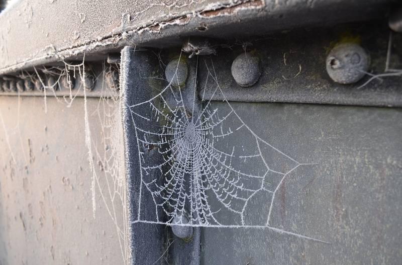 Spider webs on the bridge