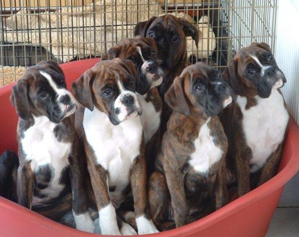 Spencer x Sky's pups