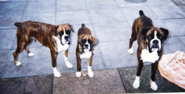Chelsea, Jamie & Oscar