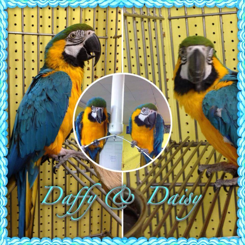 Daffy and Daisy