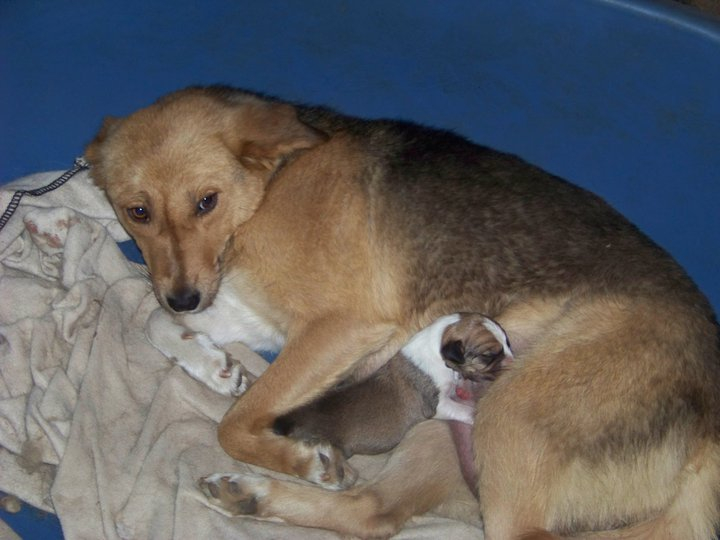 Brownie gave birth to a single pup, Todd, who was adopted.