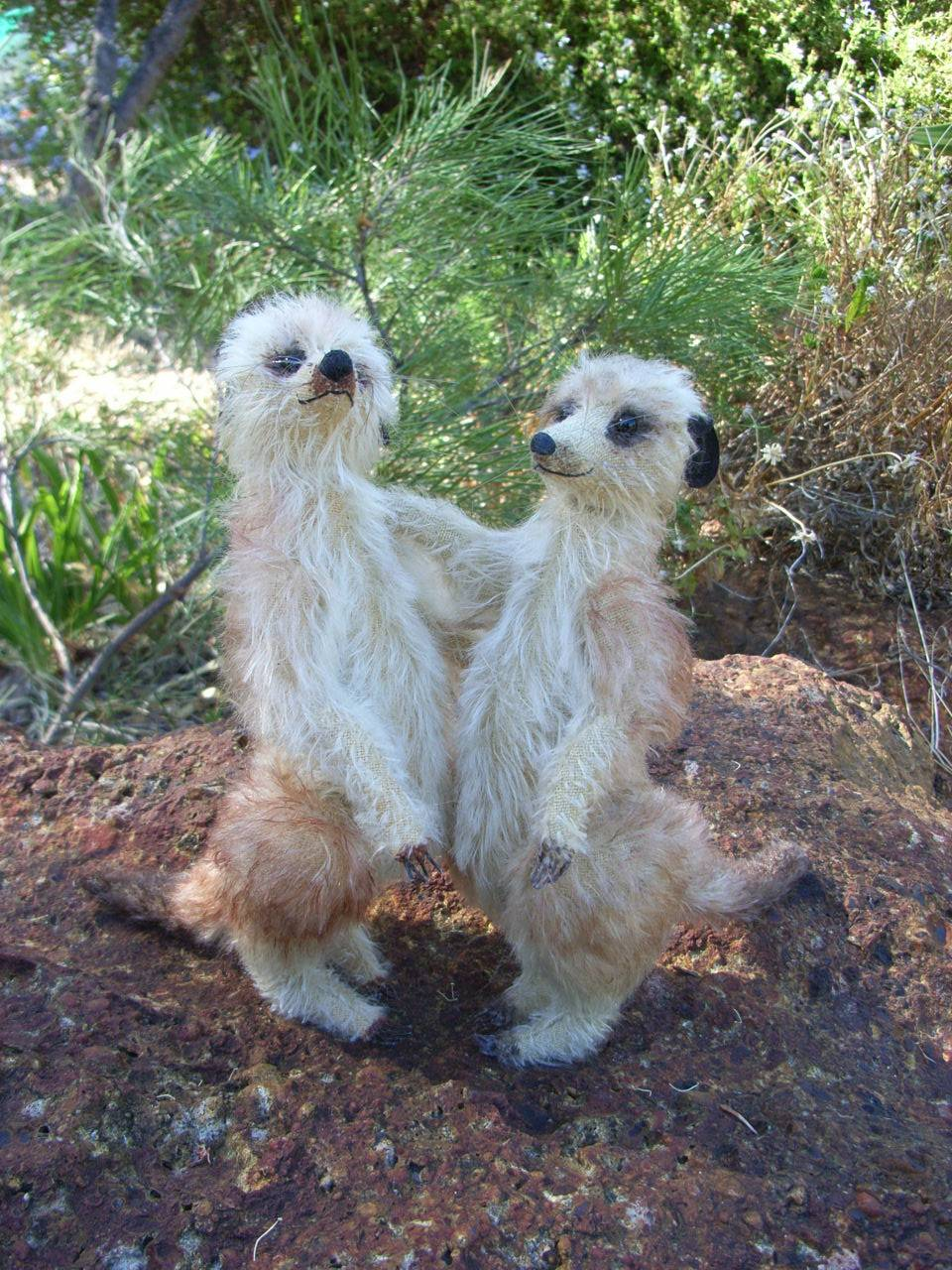 Meerkats in the garden