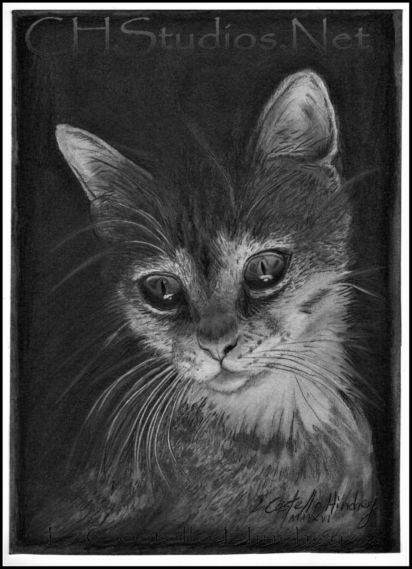 SammiJo Pet Portrait Commission