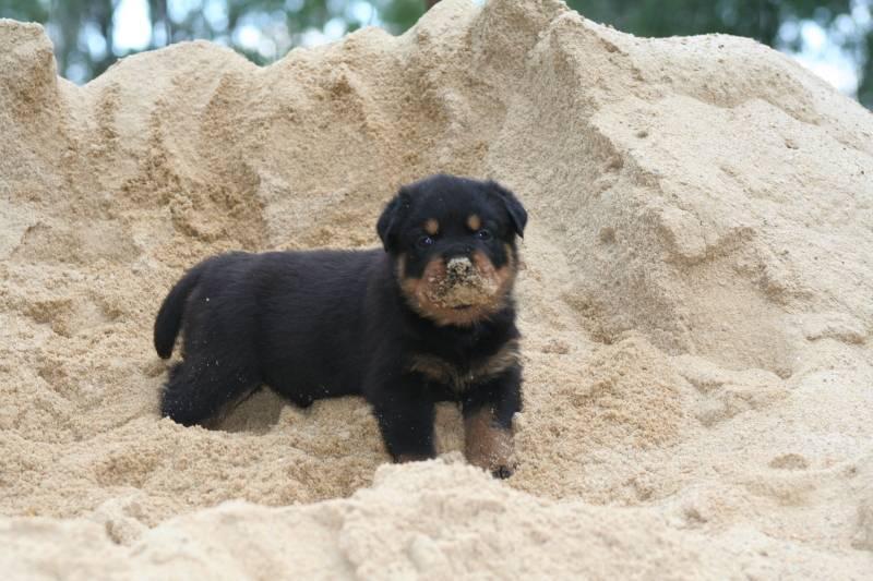Cooper at 5 weeks