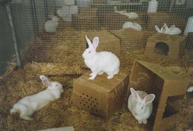 Rabbit Bedding