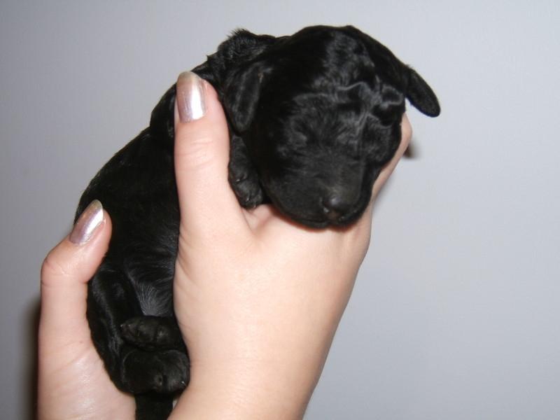 1 week old.