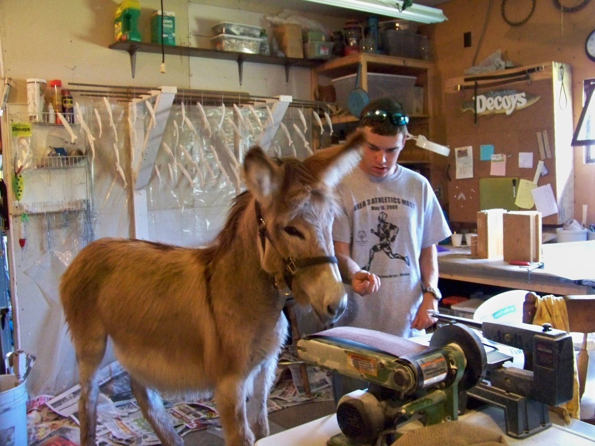 Shop Donkey Johny Ringo