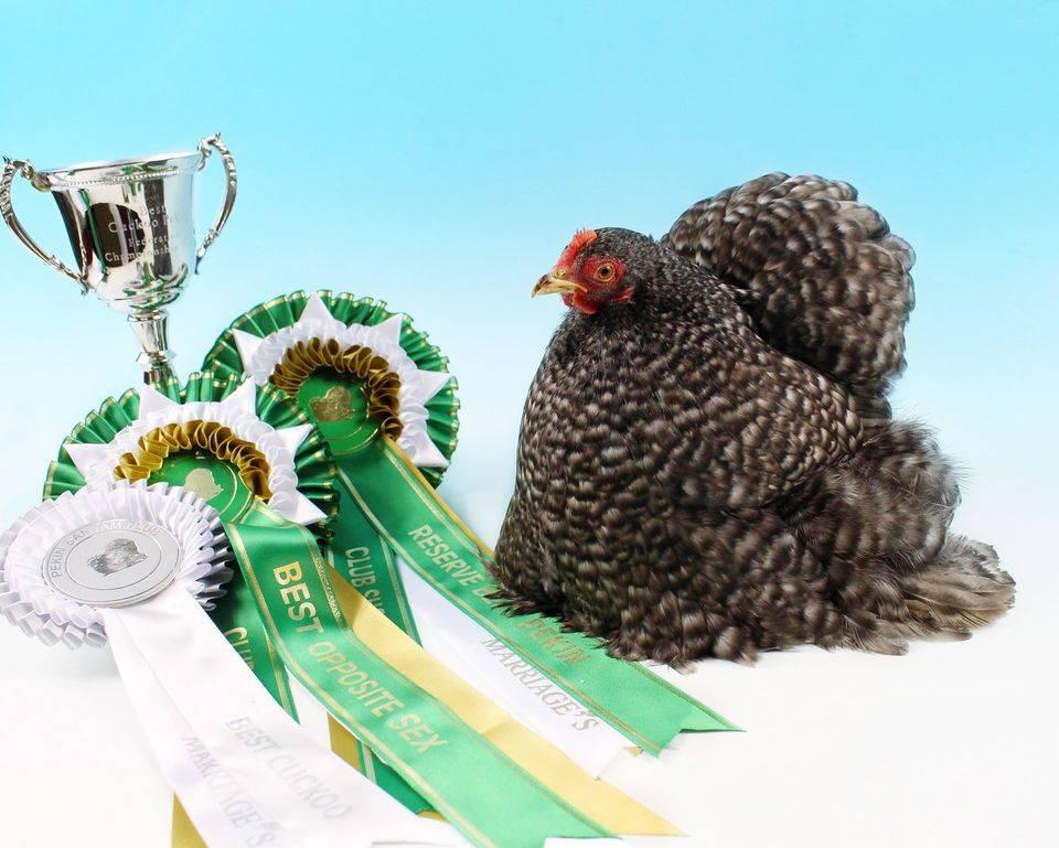 Best Cuckoo, Res Pekin, Best OppSex