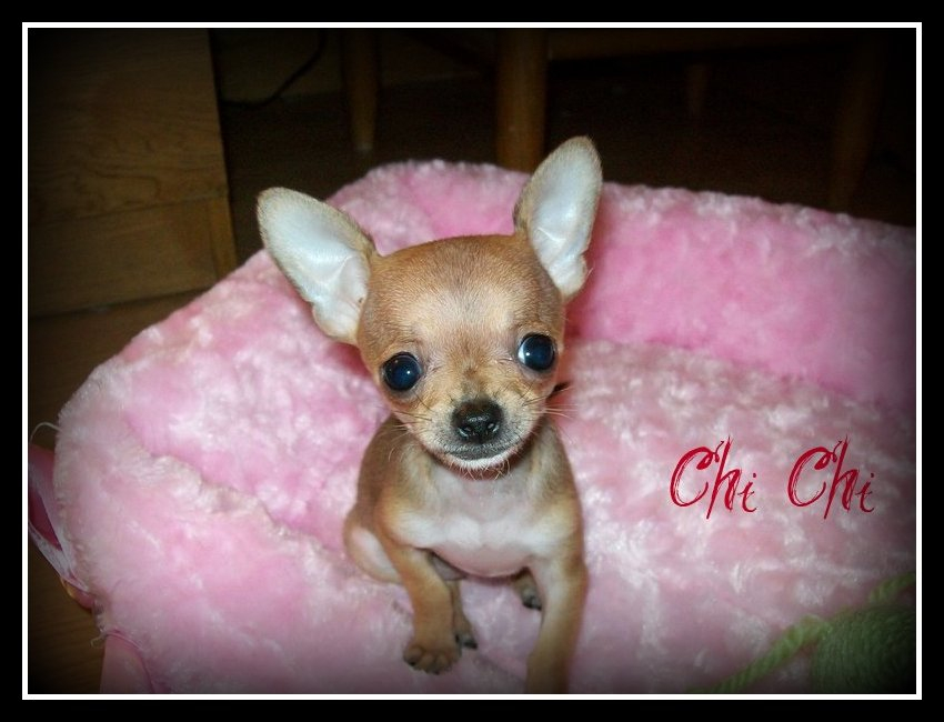 Chi Chi Tic Tac and Chalupa's
