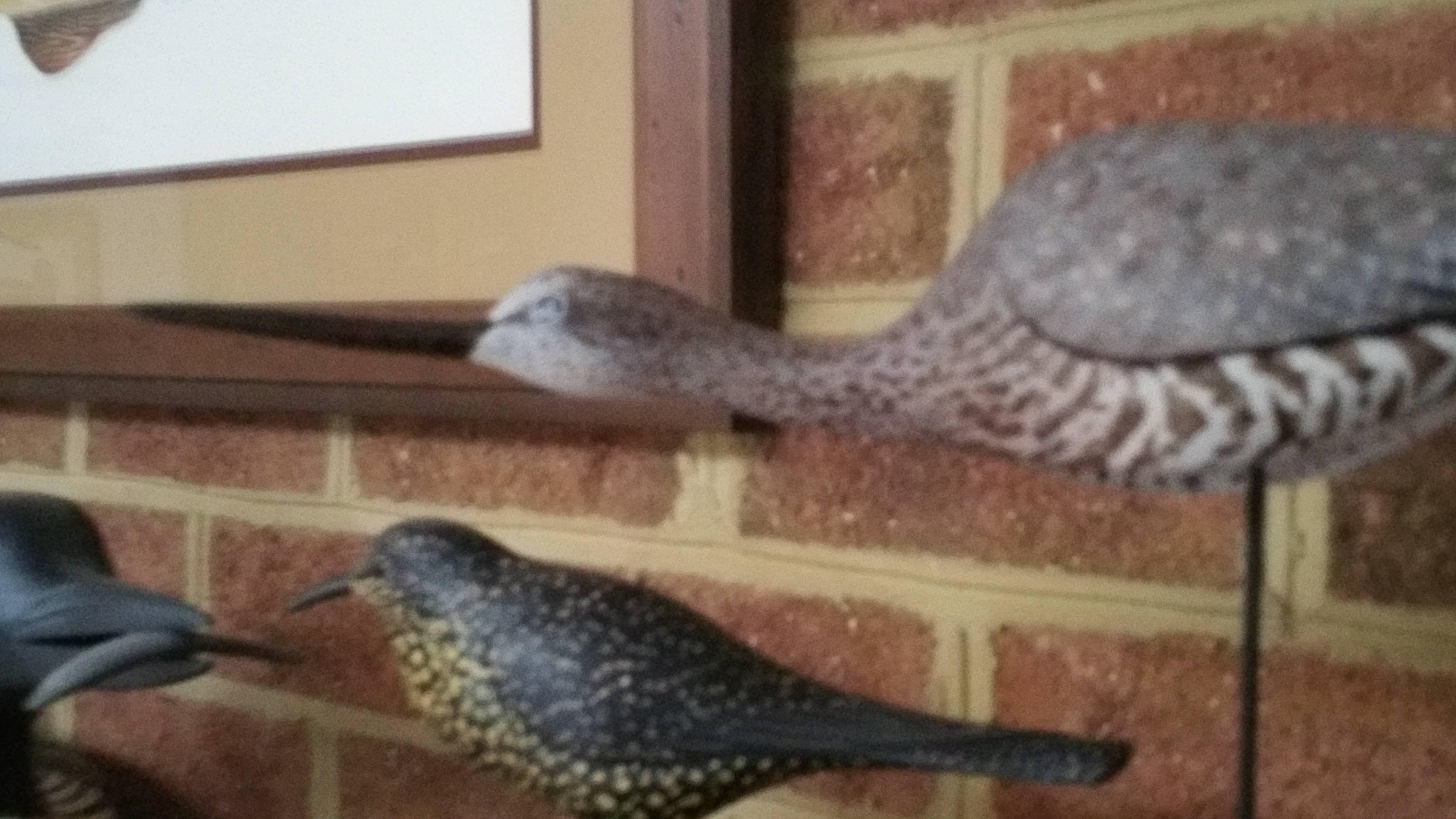 Shorebird and Songbird