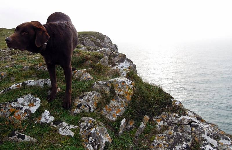 Rock dog knows no fear