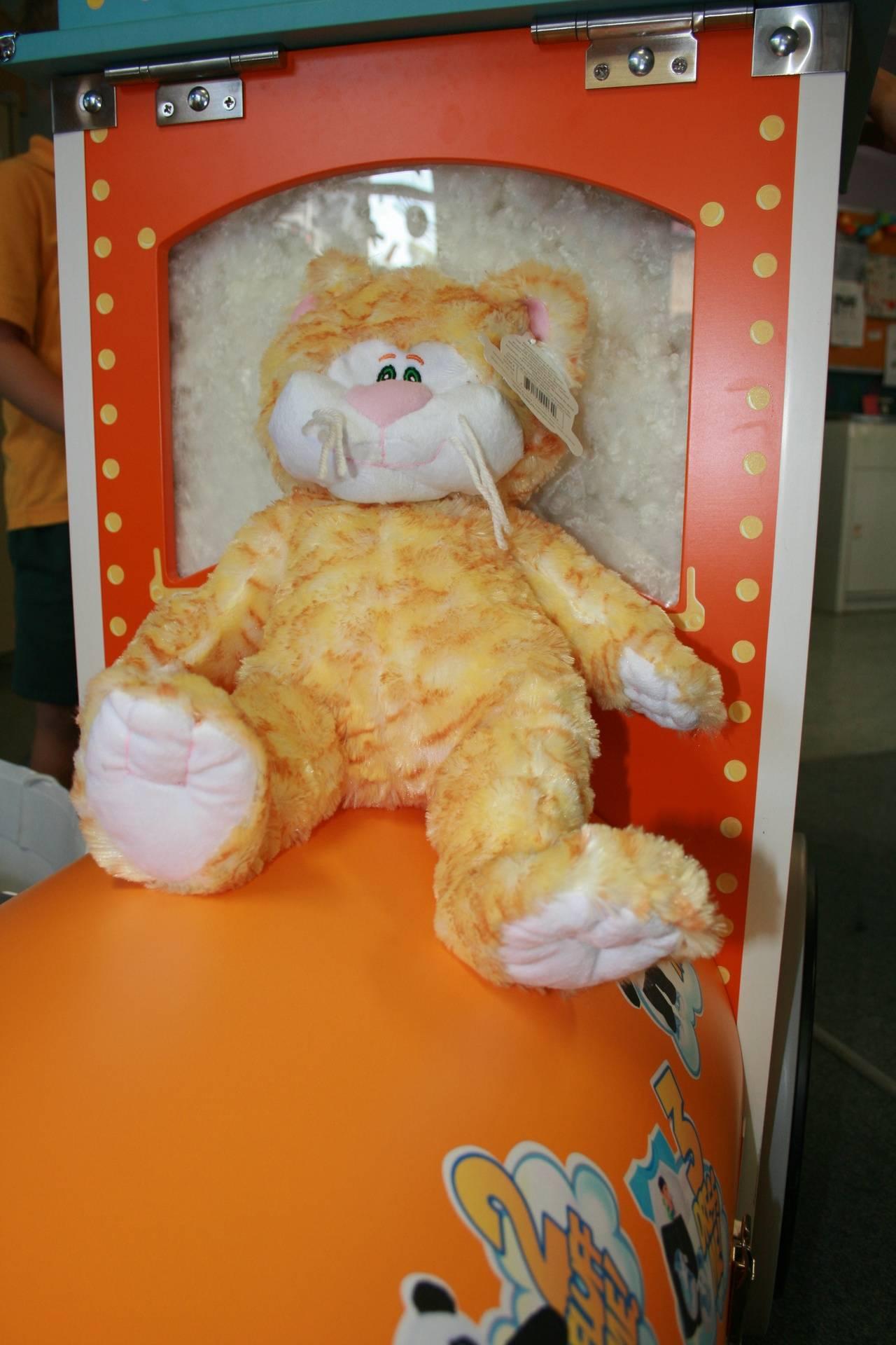 Tabby our Orange Cat
