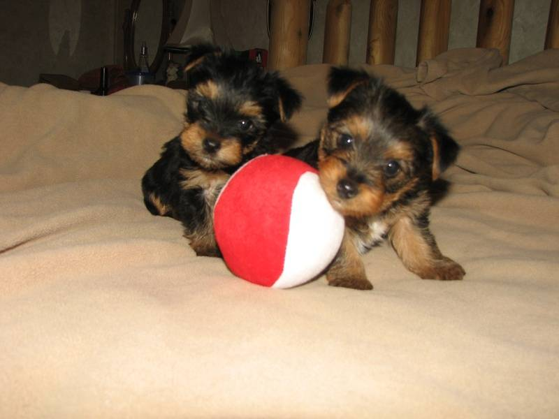 Chrissy & Caleb's Males Born 12-15-2009