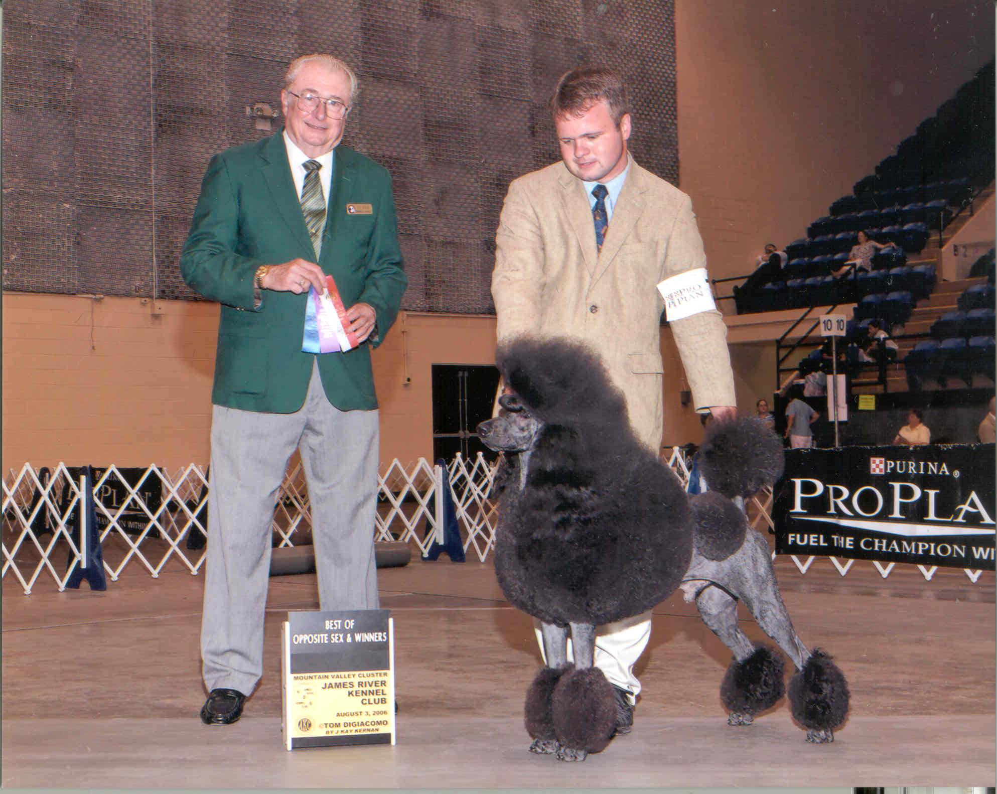 """CH Lyndale Double Delight, call name Dustin.  He is an AKC and Bermudian Champion.  He is fully health tested.  Dustin weighs 55 ibs. and is 24"""" at the shoulder."""