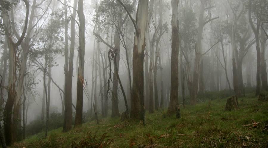 Fog Views - 2