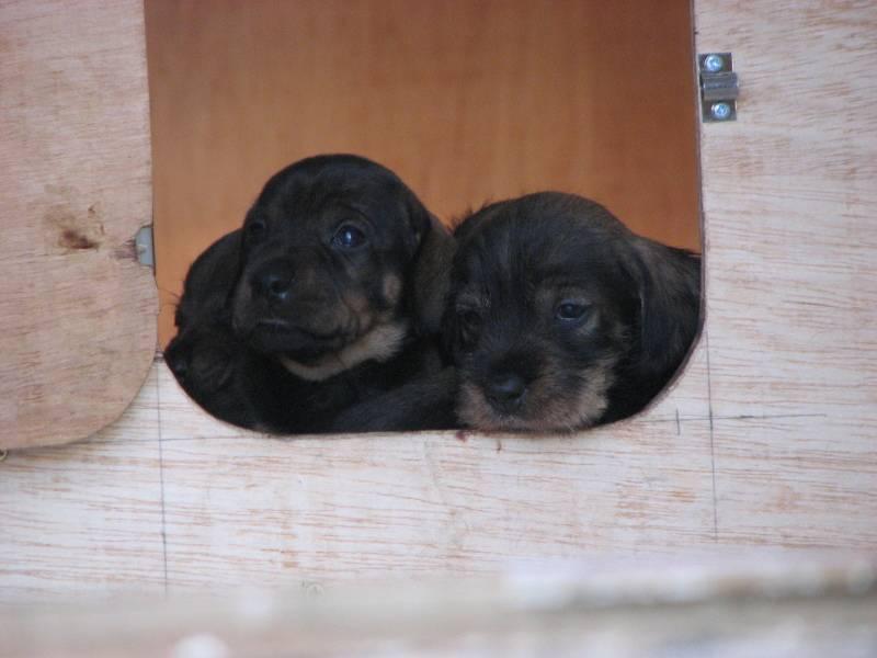 pups at door