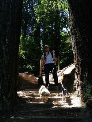 Redwood fun