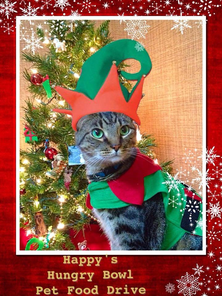 Christmas Elf 2014